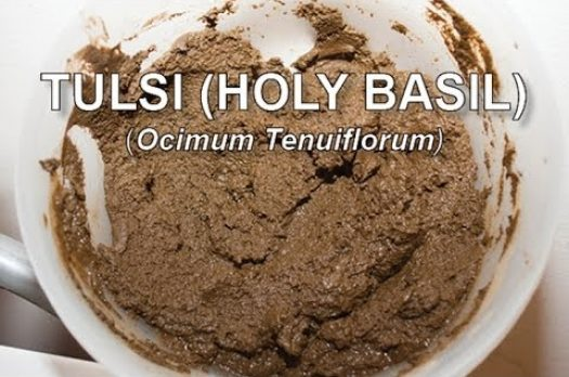 Pofiling:Tulsi (Holy Basil) Ocimum Tenuiflorum